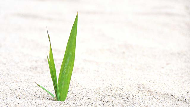 sand-straw